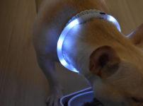 LED蛍光安全首輪