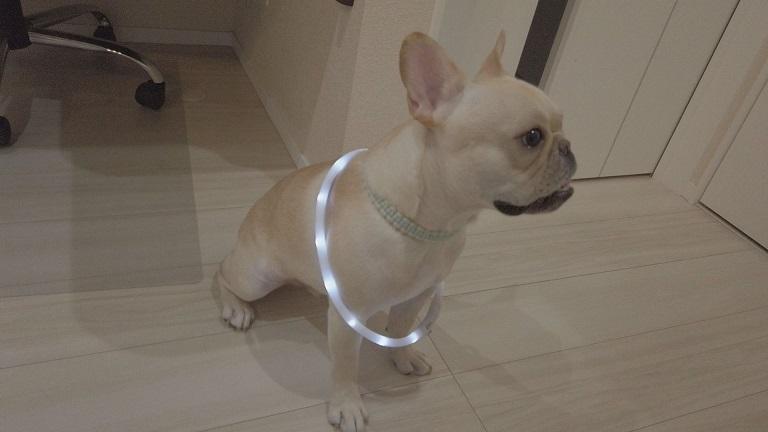 LED首輪