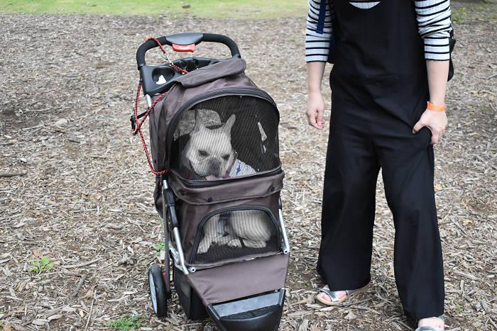 ペットカートに乗るフレンチブルドッグ